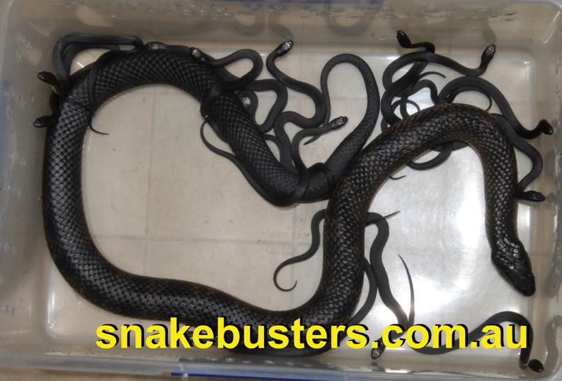 snake-handling-course